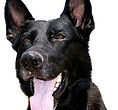 National Police Dog Foundation K9 - quwai-260x300-260x300.jpg