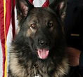 National Police Dog Foundation K9 - dozer-260x300.jpg