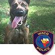 National Police Dog Foundation K9 - Kastor.jpg