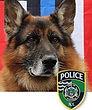 National Police Dog Foundation K9 - Rocky2.jpg