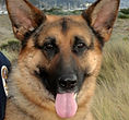 National Police Dog Foundation K9 - xello-206x300.jpg