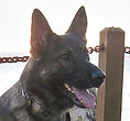 National Police Dog Foundation K9 - cannix-206x300.jpg