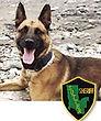 National Police Dog Foundation K9 - Bandit.jpg
