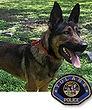 National Police Dog Foundation K9 - Bane2.jpg