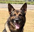 National Police Dog Foundation K9 - artus-260x300.jpg