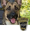 National Police Dog Foundation K9 - Midas.jpg