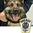 National Police Dog Foundation K9 - Brock.jpg