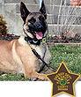 National Police Dog Foundation K9 - Cade.jpg