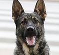 National Police Dog Foundation - Jag260x300-260x300.jpg