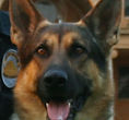 National Police Dog Foundation K9 - aik-260x300.jpg