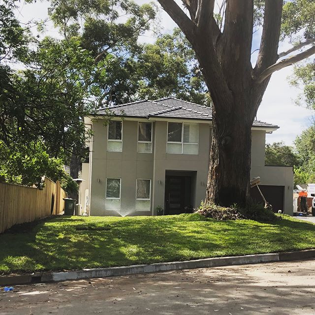 Pymble front yard recently turfed in Sap