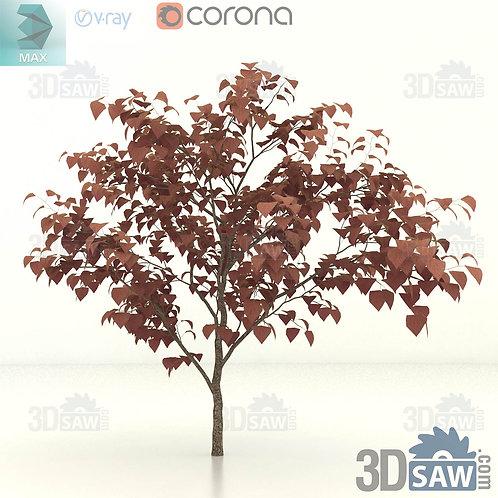 Tree, Plant - Cercis Canadensis - Eastern Redbud - MX-392