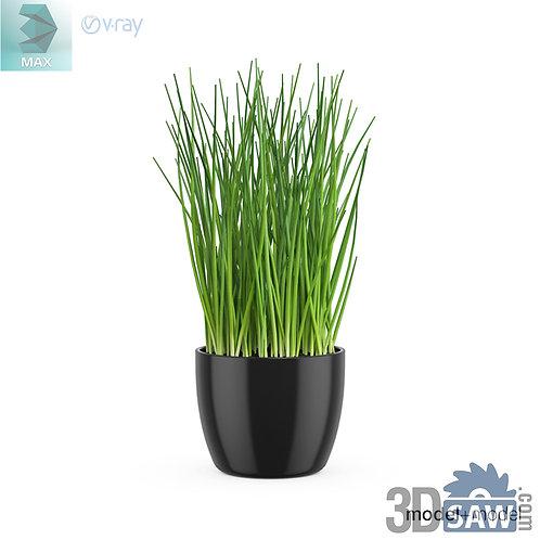 3ds Max Kitchen Plants  - Scallion - 3d Model Free Download