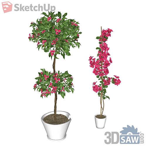 Bougainvillea Sketchup Plants - Interior Plants - SK-0000004