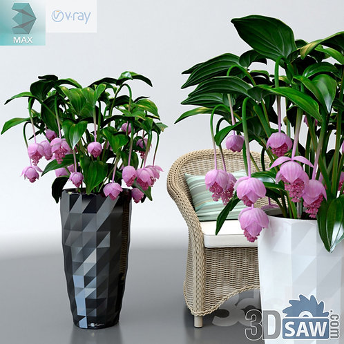 Flower Vase - Interior Plants - Medinilla Magnifica - MX-566