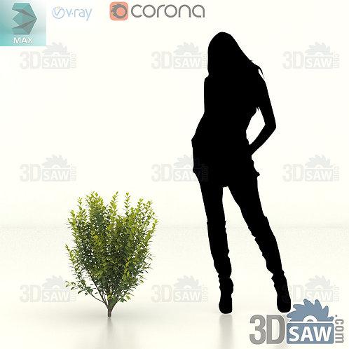 Tree, Plant, Shrubs - Ligustrum Ovalifolium - Privet Hedge - MX-411