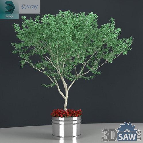 Trees - Exterior Plant - Trees In Garden - MX-0000183
