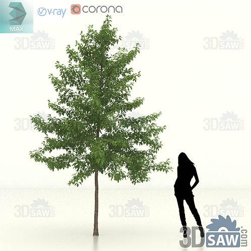 Tree, Plant - Nyssa Sylvatica - Black Gum - MX-463