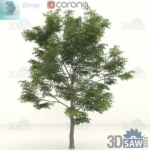 Tree, Plant - Fraxinus excelsior - Common Ash - MX-397