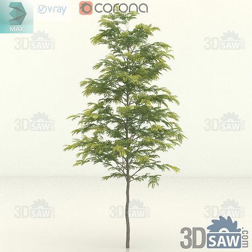Tree, Plant - Gleditsia Triacanthos - Honey Locust - MX-403