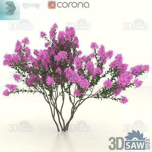 Tree, Plant - Lagerstroemia Indica - Crape Myrtle - MX-407