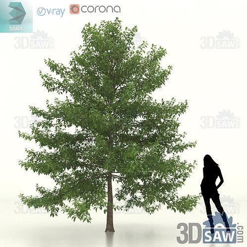 Tree, Plant - Nyssa Sylvatica - Black Gum - MX-465