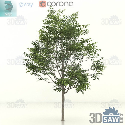 Tree, Plant - Fraxinus excelsior - Common Ash - MX-396