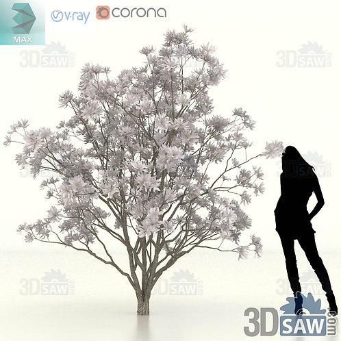 Tree, Plant - Magnolia Stellata - Star Magnolia - MX-453