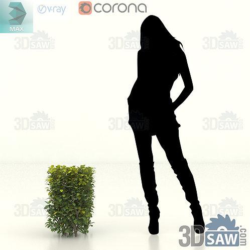 Tree, Plant, Shrubs - Ligustrum Ovalifolium - Privet Hedge - MX-414