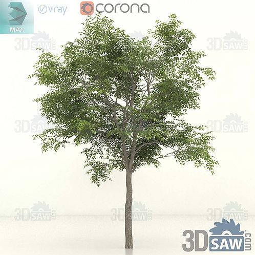 Tree, Plant - Fraxinus excelsior - Common Ash - MX-399