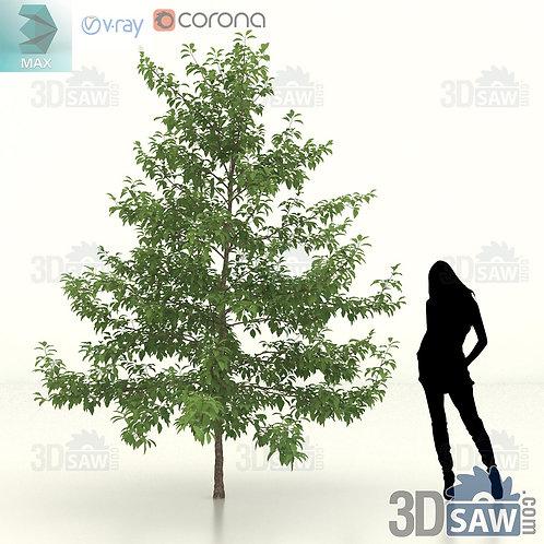 Tree, Plant - Nyssa Sylvatica - Black Gum - MX-462