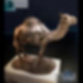 3ds Max Wood Camel Statue Sculpture Decor Set - Decoration Items - Free 3d Models Download - 3DSAW.COM