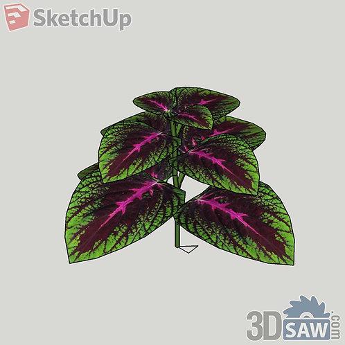 Coleus Hybrid Sketchup Plants - Interior Plants - SK-0000003
