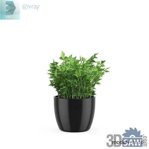 3ds Max Kitchen Plants  - Cilantro - 3d Model Free Download