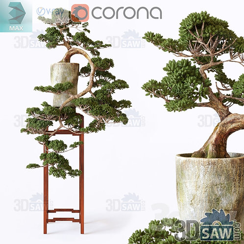 Plants Decor - Bonsai Plants - Interior Plants - MX-0000274