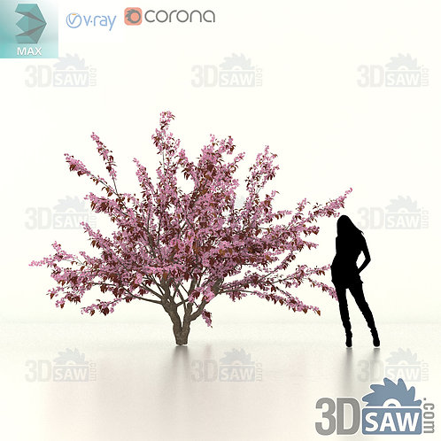 Tree, Plant - Prunus Cerasifera - Cherry Plum - MX-474