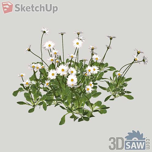 Marguerite Sketchup Plants - Interior Plants - SK-0000005
