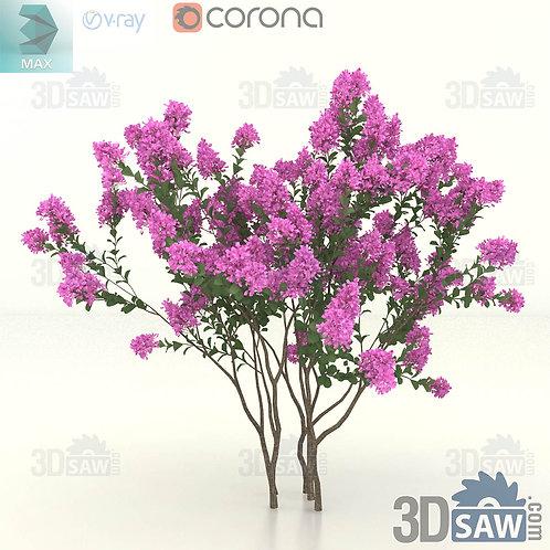 Tree, Plant - Lagerstroemia Indica - Crape Myrtle - MX-406