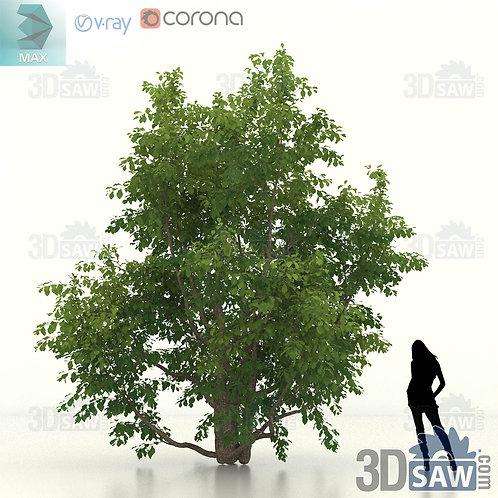 Tree, Plant - Parrotia Persica - Persian Ironwood - MX-470