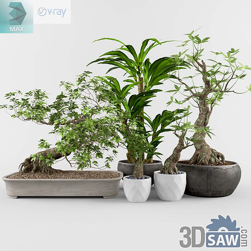 Bonsai Tree Plant - MX-0000179