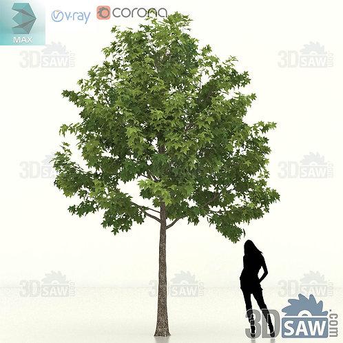 Tree, Plant - Liquidambar Formosana - Sweet Gum - MX-449