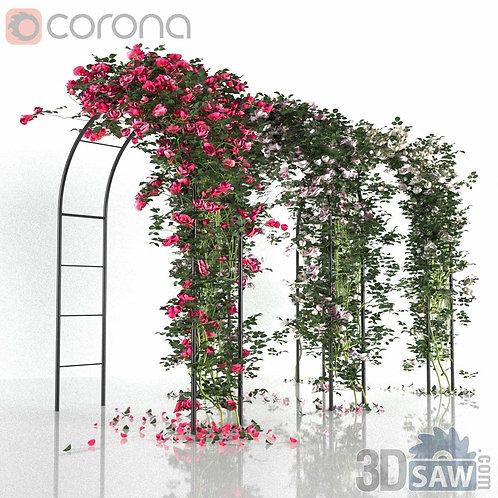 Corona Arch Roses - Ivy Plant - Pergola Plants - MX-0000091