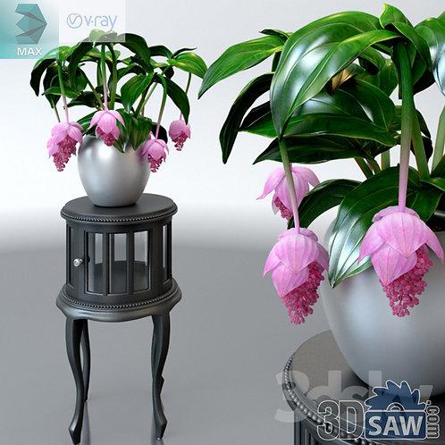 Flower Vase - Interior Plants - Medinilla Magnifica - MX-565