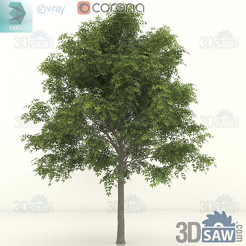 Tree, Plant - Fraxinus excelsior - Common Ash - MX-398