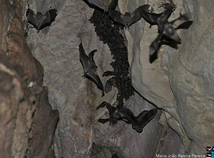 caverna_logo.jpg