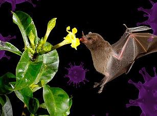Artigo_Morcegos e virus mortais.jpg