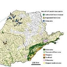 Artigo_Genetic diversity of bats coronav