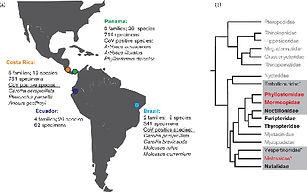 Artigo_Highly diversified coronaviruses