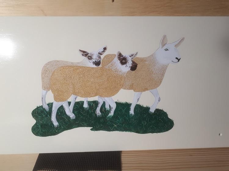 Thornes-Sheep.jpg