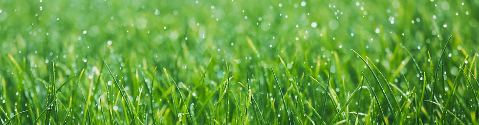 Wet%20grass_edited.jpg